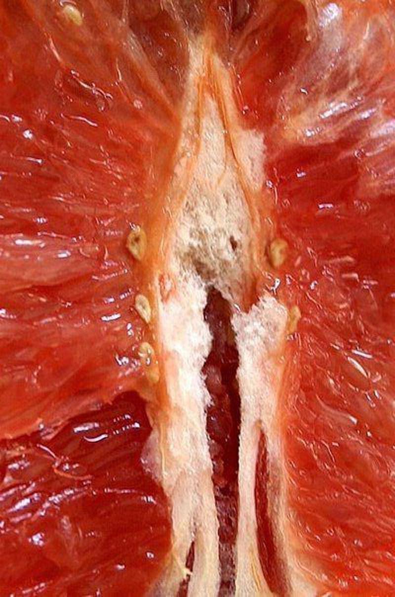 фрукты в разрезе как вагина фото большим удовольствием
